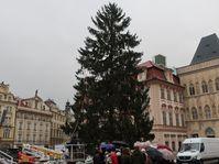 Auf dem Altstädter Ring steht schon der Weihnachtsbaum (Foto: Martina Schneibergová)