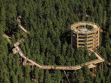 Foto: Archivo de la organización Stezka korunami stromů Lipno