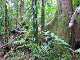 Tropischer Regenwald - tropický deštný les (Foto: Thomas Schoch, CC BY-SA 2.5)