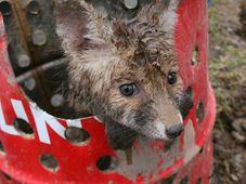 Раненый зверек, Фото: Архив Чешского союза охраны природы