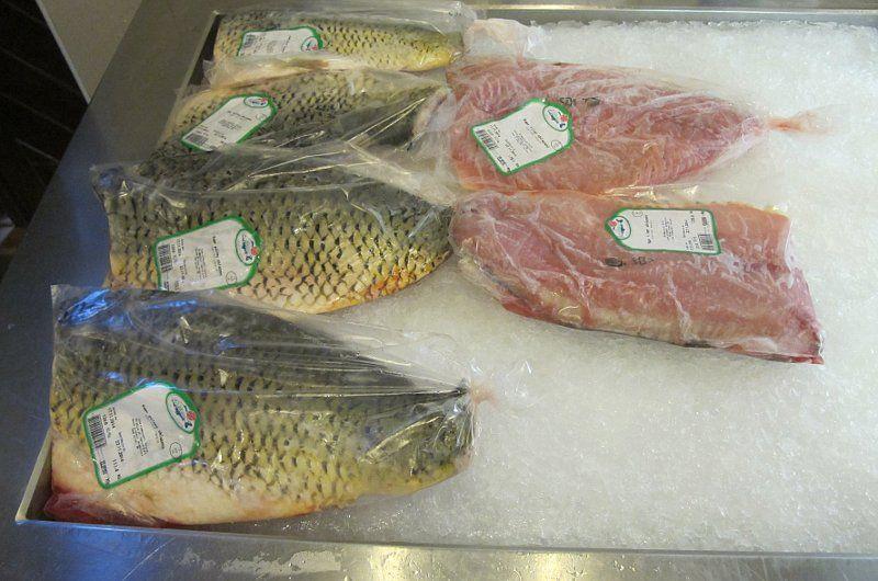 Tschechen konsumieren zu wenig fisch regierung f r for Carpa de rio