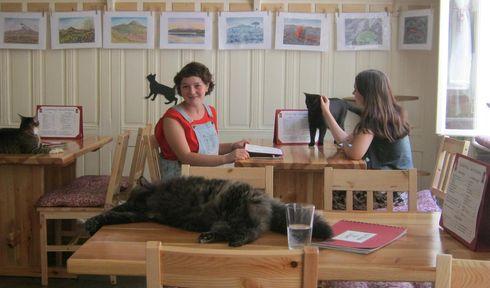 Kočičí Kavárna Freya, photo: Dominik Jůn