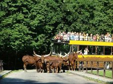 Зоопарк в городе Двур Кралове (Фото: Архив зоопарка)