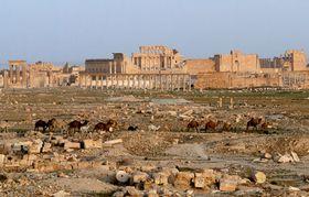 Palmýra, foto: Adamkou, CC BY 3.0