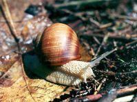 Photo: www.sweb.cz/tabun, Martin Zapletal