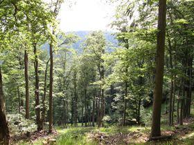 Wald rund um Jezeří (Foto: Hadonos, Public Domain)