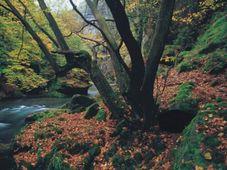Photo: National Park České Švýcarsko