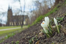 ¡Por fin ha llegado la primavera a la República Checa! Foto: Jakub Linhart