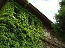 Casa de Karel Čapek en Praga, foto: ČT