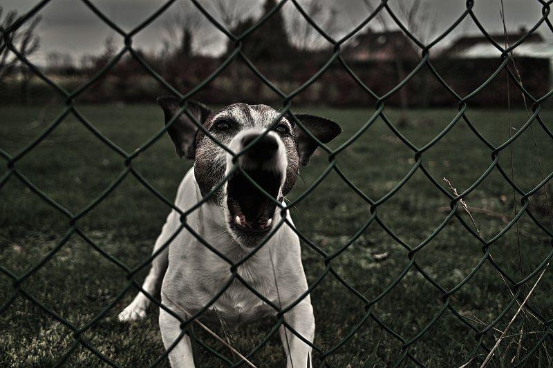 Dog Bad Behaviour Barking