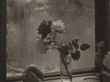 Josef Sudek, 'La Dernière Rose', 1956, photo: © Succession Josef Sudek / Jeu de Paume