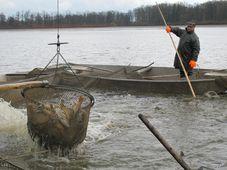 Výlov rybníka Svět, foto: Ivana Vonderková