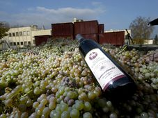 Святомартинское вино, Фото: ЧТК