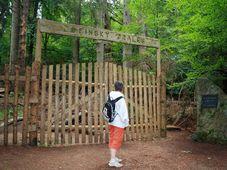 La forêt de Žofín
