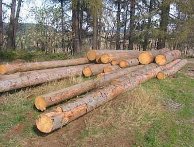Radio praga descubren tala ilegal de rboles por for Investigacion de arboles