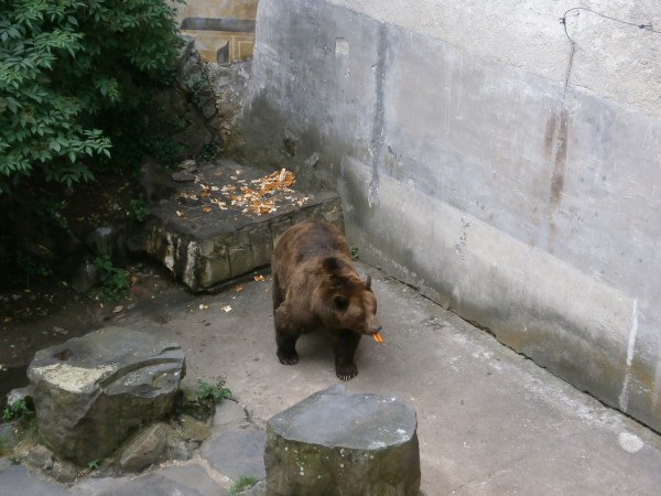VICTORIA ZAMMIT – 'Don't you dare snatch my carrots' - Cesky Krumolov Castle Bear Moat