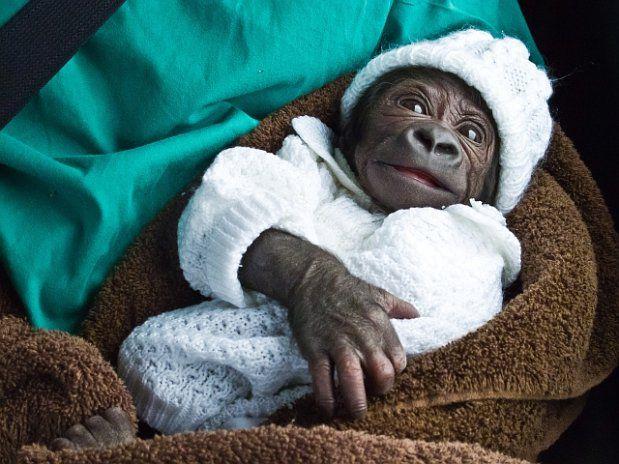 frühchen stuttgart geboren