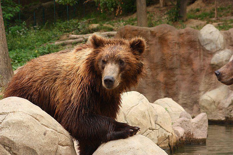 bear prague