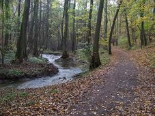 Михельско-Кунратицкий лес, Фото: ŠJů, CC BY-SA 4.0 International