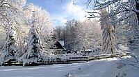 Stiftung Egerwald verwaltet einen Wald im tschechisch-bayerischen Grenzgebiet (Foto: ČT24)
