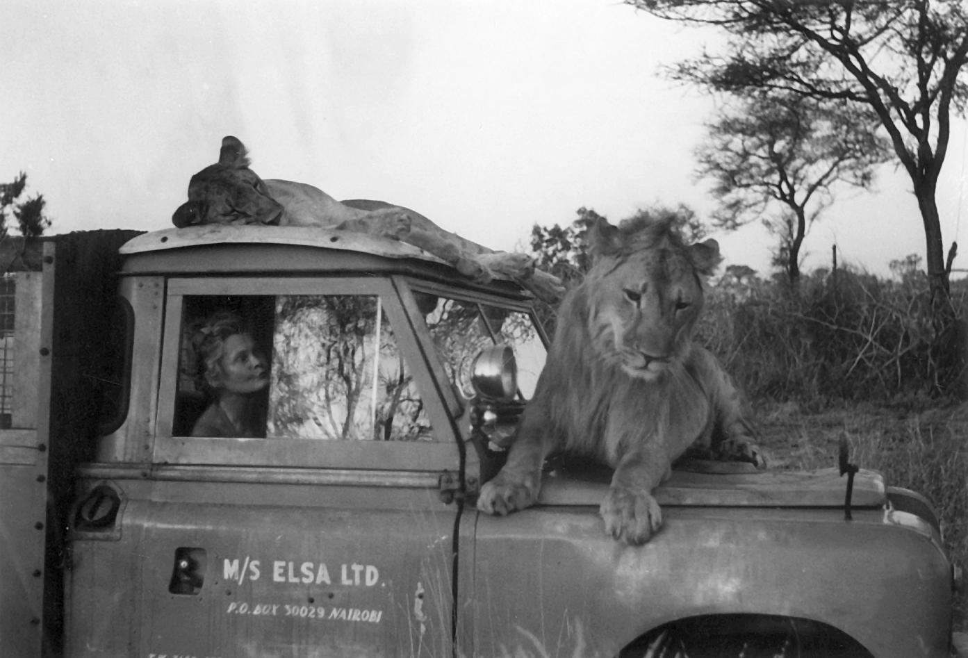 Joy Adamsonová při projížďce v buši, foto: archiv Zuzany Beranové