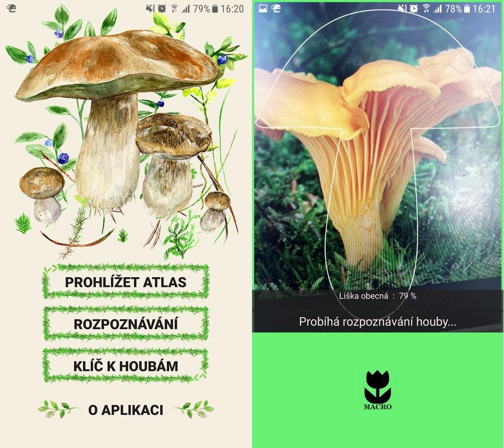 Une application mobile pour identifier les champignons pour le plus grand bonheur des houba i - Application pour reconnaitre les champignons ...