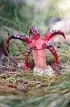 Květnatec Archerův, foto: Steveb68, Wikimedia CC BY 3.0