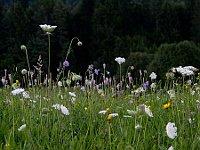 Pflanzen - rostliny (Foto: Thomas Huntke, CC BY-SA 3.0 DE)