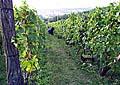 Weingarten Máchalka (Foto: www.machalka.cz)