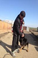 V osadě Jarovnice vychovávají psy 35 let (Foto: Vojtěch Berger)