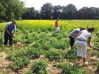 Romové na poli pěstují zeleninu a další plodiny (Foto: Vojtěch Berger)