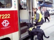 Vodicí pes v akci (Foto: www.helppes.cz)