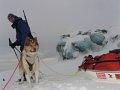 Polarhund Zan (Foto: www.cestynasever.cz)