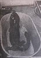 Riesensalamander im Keller der Naturwissenschaftlichen Fakultät (Foto: Archiv der Naturwissenschaftlichen Fakultät der Karlsuniversität)