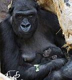 Mutter Kijivu mit ihrem Jungen (Foto: ČTK)