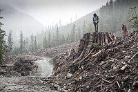 'Cuando se Corta un Bosque'