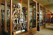 Photo: Hrdlicka Museum of Man