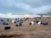 Volunteers cleaning the coast hit by oil spill