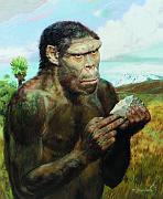 'Homo erectus olduvaiensis', 1972