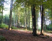 Lesy pod Roštejnem