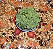 Symboly svátku Novruz