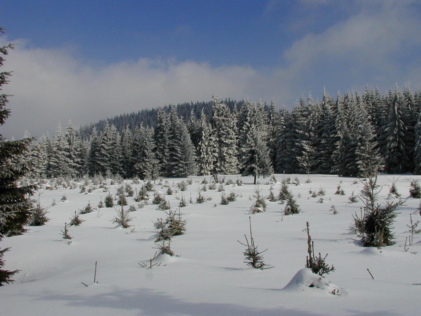 http://img.radio.cz/pictures/r/czech/krusne_hory/krusne_hory3.jpg