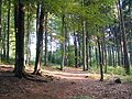 Forest under Rostejn