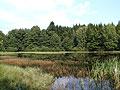 Pond Silhan