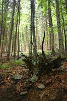 Wald - les (Foto: Štěpánka Budková)