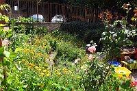 Komunitní zahrada nízkoprahového klubu (Foto: Kristýna Maková)