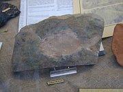 Fossilie eines Fisches