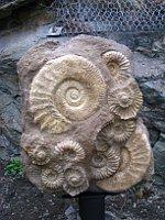 Ammoniten (Foto: Martina Schneibergová)