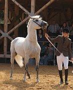 """Ausstellung """"Pferd"""""""