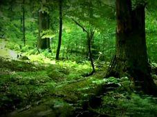 Foto: Archiv der Umweltorganisation Čmelák